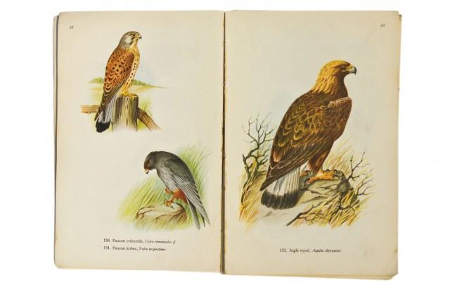 Oiseaux de France